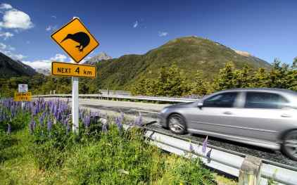 driving-new-zealand-xlarge.jpg