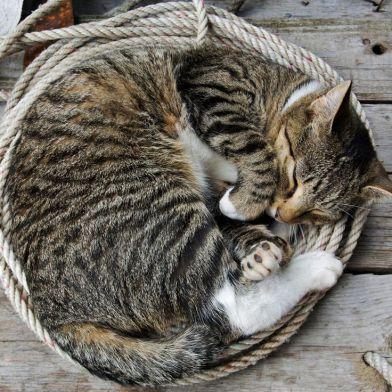 Curled-up-cat-sleeping.jpg